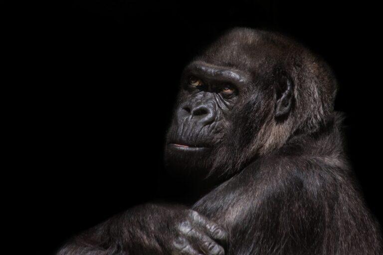 Monkeymind - Sperr den Affen weg!