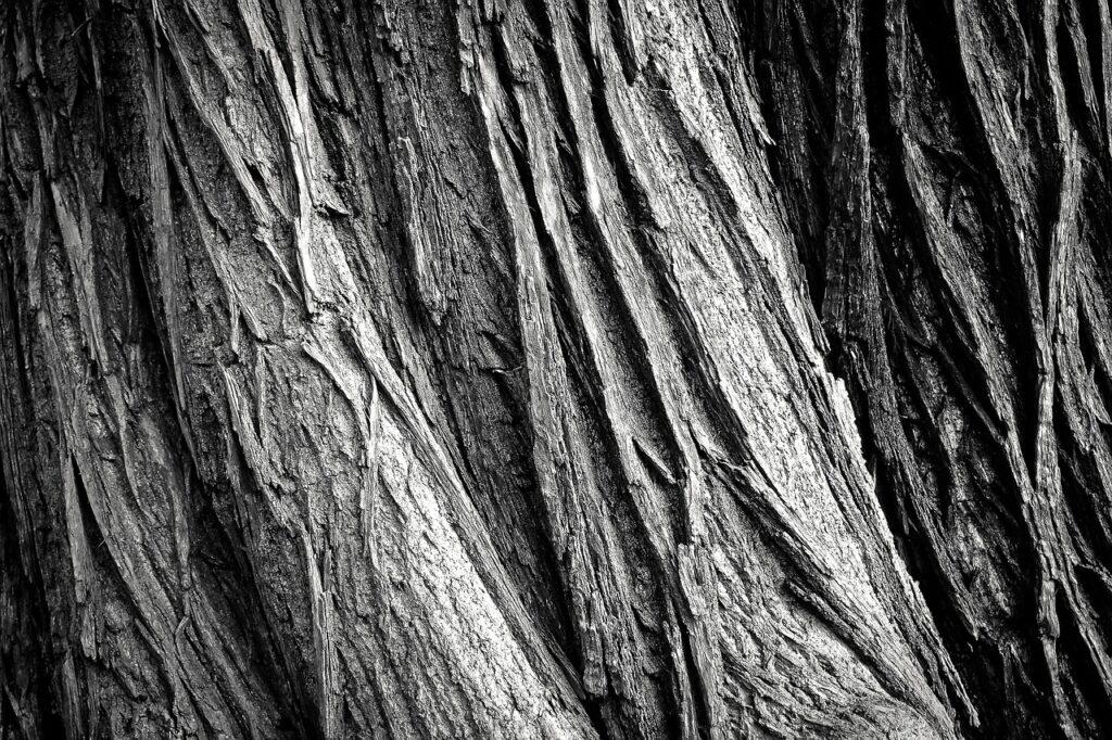 tree 2106115 1280